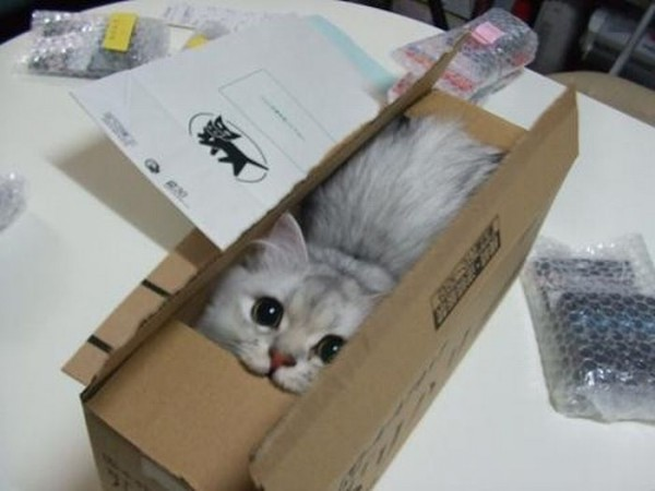 cat-in-a-box-600x450